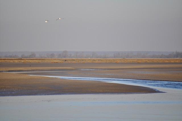 Winter too in Bay de Somme/France