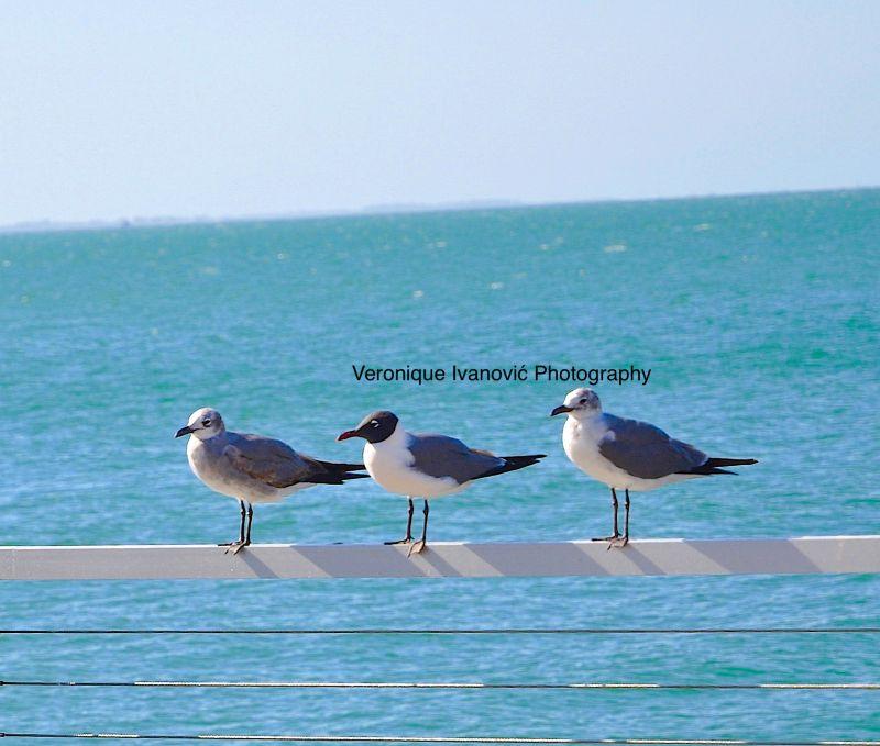 BIRDS ON MY WAY